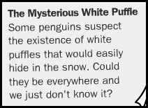 Club Penguin White Puffle Rumours